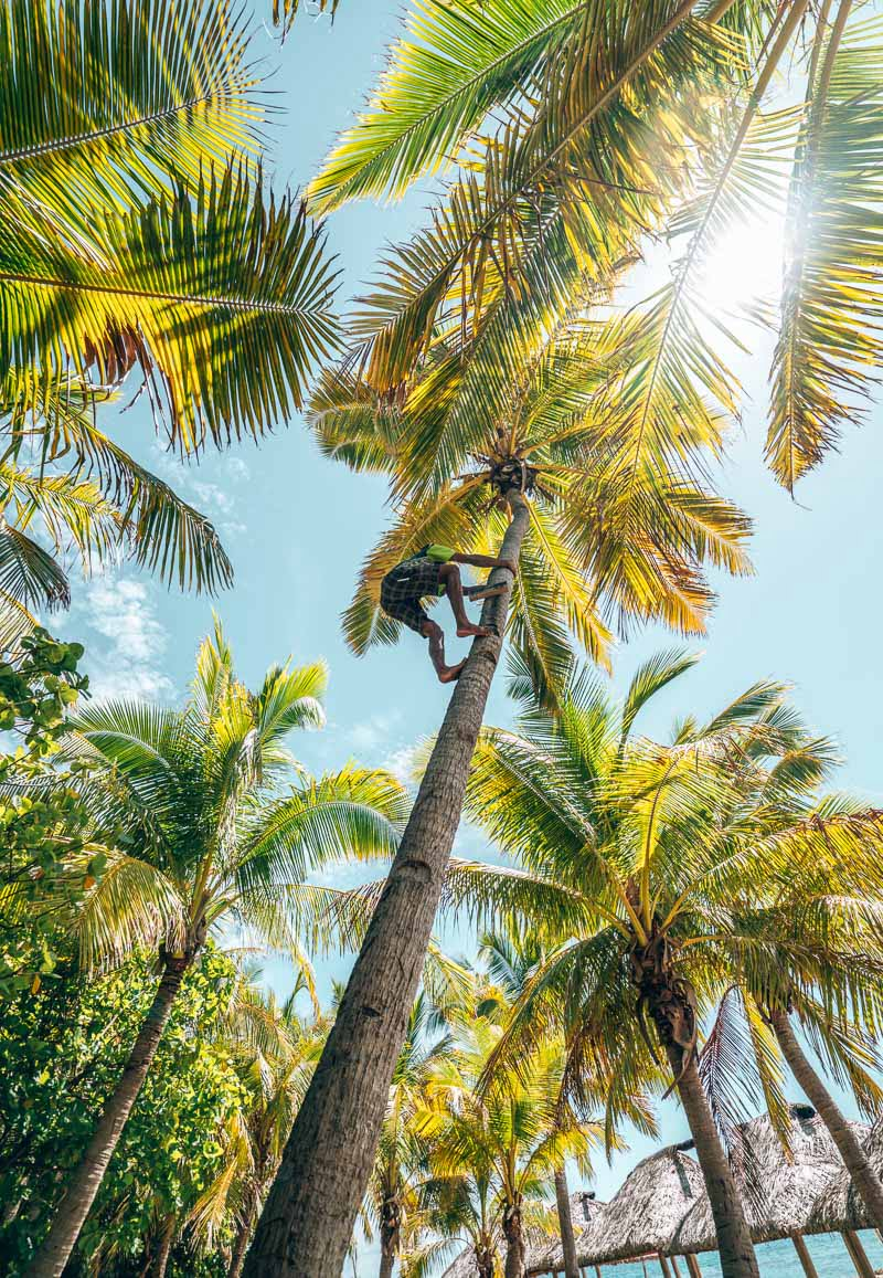 misa climbing a tree at serenity island resort fiji