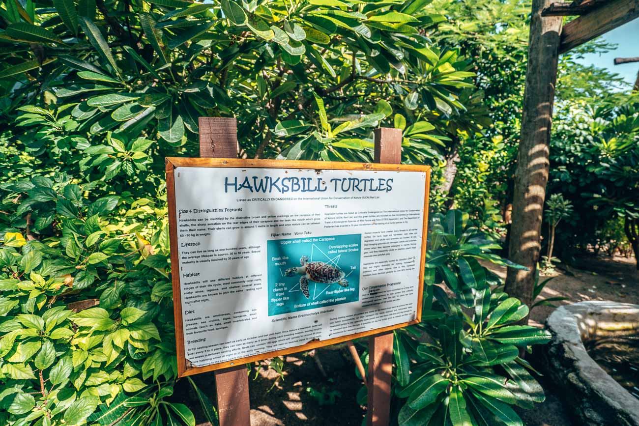 turtle sanctuary at serenity island fiji