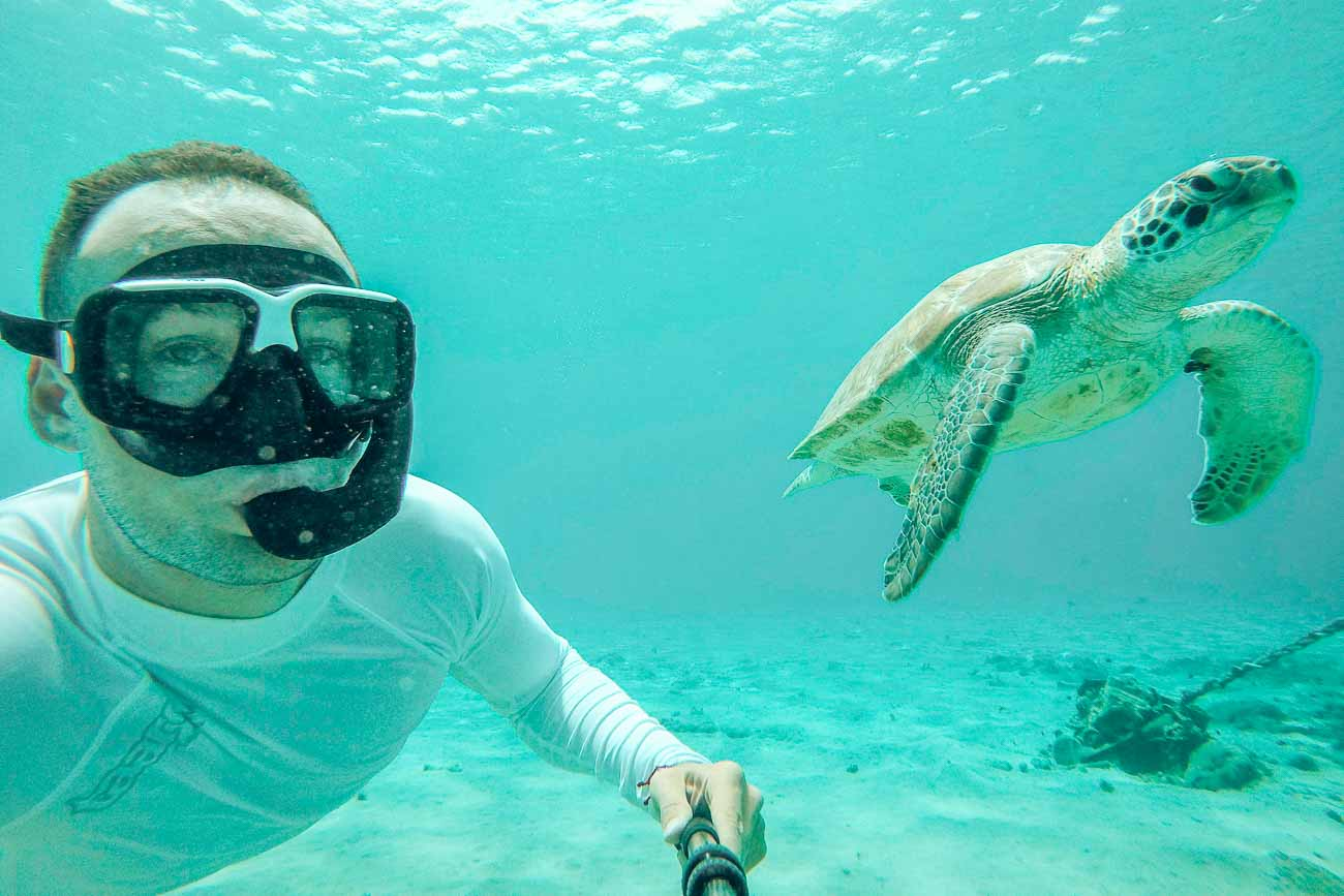 swim with turtles curacao