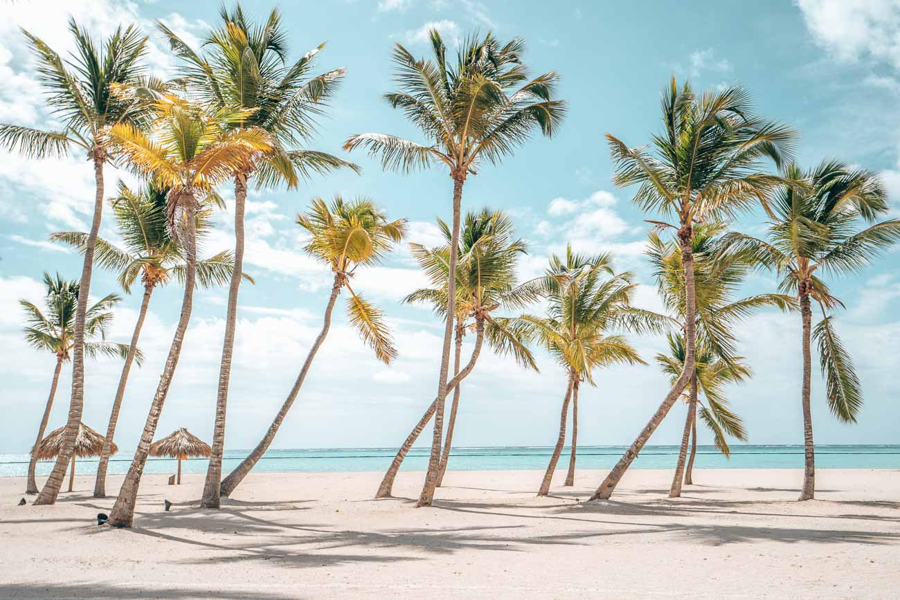 beautiful palm trees on a beach with teal blue